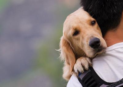 Emergency Service – Dr Brodetsky Mobile Veterinary Service in Toronto